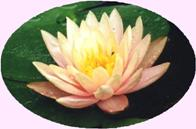 Find your true Self with Pure Meditation at the Self Realization Sevalight Centre for Pure Meditation, Healing & Counselling, Bath MI USA